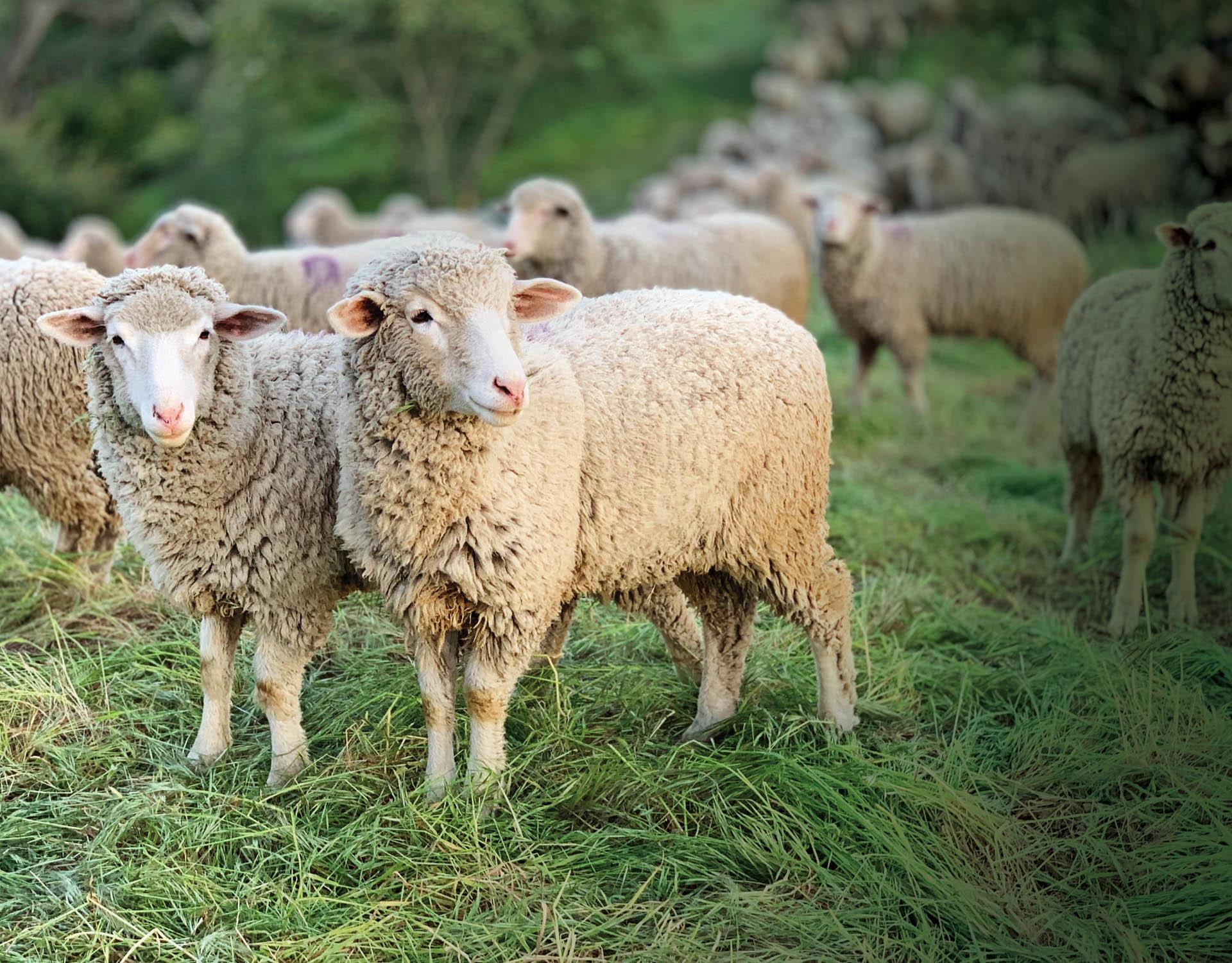 Leadership Lesson:  Shepherding Women
